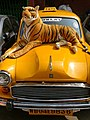 Bengal Tiger Resplendant on Taxi - New Market - Chowringee District - Kolkata - India (12249632594).jpg