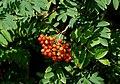Berries, Scarva - geograph.org.uk - 906627.jpg