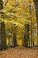 Beukenlaan herfst.jpg