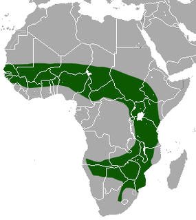 species of mammal