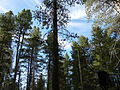 Big Meadow Sequoia National Forest.JPG