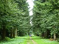 Big Wood, Thetford Forest - geograph.org.uk - 222653.jpg