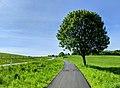 Bike path near Hørsholm (51325138436).jpg