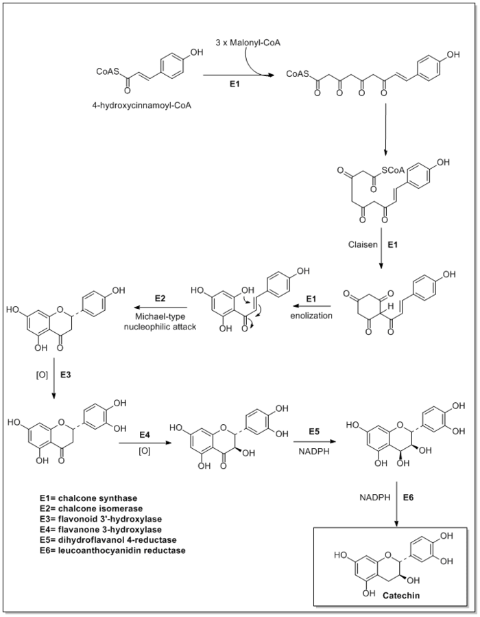 mechanism of steroid hormone action wikipedia