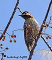 Black-neckedwoodpeckerDSC04388 250813 buenosaires.jpg