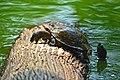 Black Turtle.jpg