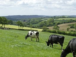 Blackdown Hills at Dalwood.JPG