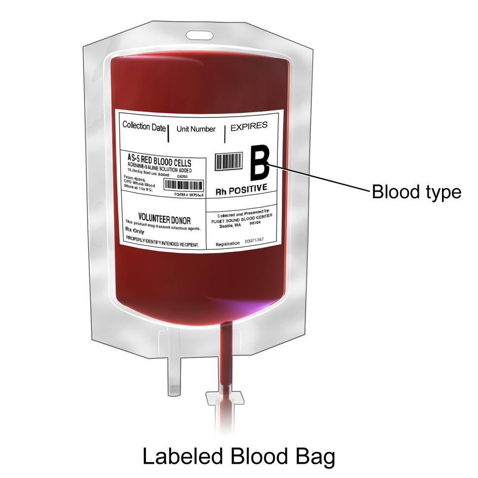 Blausen 0086 Blood Bag