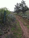 Blueberry trail at Moore park.jpeg