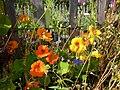 Blumen am Gartenzaun – Arboretum Ellerhoop 4.jpg