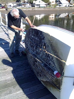 Tributyltin - Biofouling on the hull of a boat