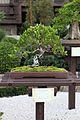 Bonsai (33269442905).jpg