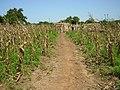 Bontioli NP Burkina Faso agriculture.jpg