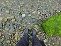 Boots (27514388075).jpg