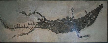 Borealosuchus