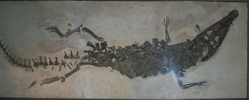 Borealosuchus wilsoni 1