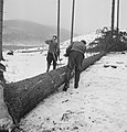 Bosbewerking, arbeiders, boomstammen, Bestanddeelnr 251-7096.jpg