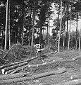 Bosbewerking, arbeiders, boomstammen, gereedschappen, werkzaamheden, motorzagen, Bestanddeelnr 253-5941.jpg