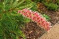 Botanical Gardens Redcliffe-162 (170319622).jpg