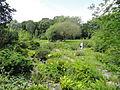 Botanischer Garten, Frankfurt am Main - DSC02659.JPG