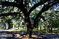 Branch Crazy (3253116427).jpg