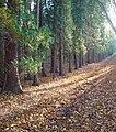 Bridleway southwards through Badlesmere Park Wood - geograph.org.uk - 1051235.jpg