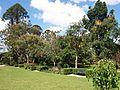 Brisbane City Botanic Gardens (13).jpg