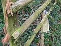 Broken gate, Athelhampton - geograph.org.uk - 1177092.jpg