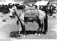 Bundesarchiv Bild 135-S-09-06-21, Tibetexpedition, Volksfest, gesatteltes Pferd.jpg