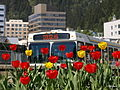 Bus 5190012.JPG