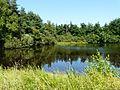 Busserolles étang bord D88 nord Villotte.JPG