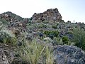 Butcher Jones Trail - Mt. Pinter Loop Trail, Saguaro Lake - panoramio (57).jpg