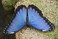Butterfly (5543534784).jpg