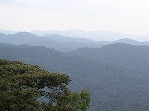 Albertine Rift montane forests - Bwindi Impenetrable Forest in Uganda