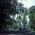 COLLECTIE TROPENMUSEUM Laan met palmen in de Kebun Raya Bogor TMnr 20025531.jpg