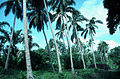 CSIRO ScienceImage 1896 Palm Trees in Vanuatu.jpg