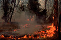 CSIRO ScienceImage 551 Bushfire.jpg