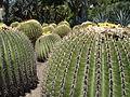 Cactus & Succulents (183444615).jpg
