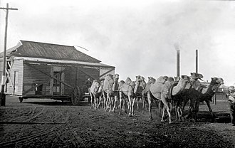 Camel train - Camel train transporting a house, Kalgoorlie, Western Australia, ca. 1928
