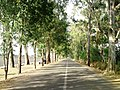 Camino a San Francisco Rancho Viejo - panoramio.jpg