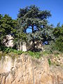 Campidoglio - via di monte tarpeo 1200234.JPG
