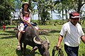 Carabao at Bohol 2017 o.jpg