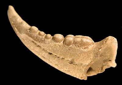 relatieve daterende fossielen definitie