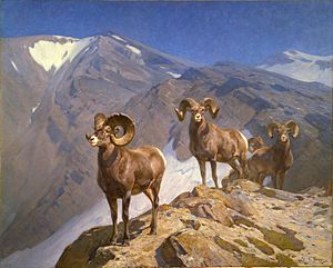 Carl Rungius -  Carl Rungius - Big Horn Sheep on Wilcox Pass (1912)