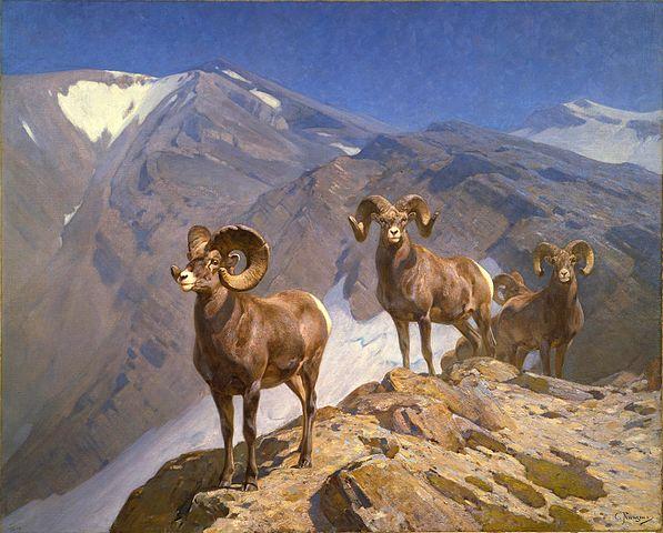 597px-Carl_Rungius_-_Big_Horn_Sheep_on_W