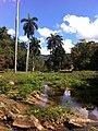 Carr Guanayara, Cuba - panoramio (2).jpg