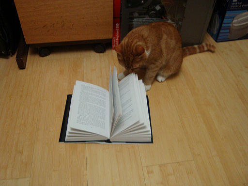 Cat with book 5074757613