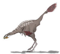 Caudipteryx2mmartyniuk.png