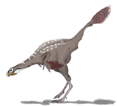 Caudipteryx2mmartyniuk.png