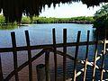 Caye Caulker Forest Reserve 09.jpg